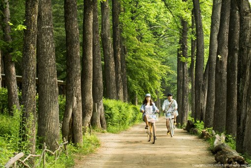 Nami Island & Petite France & Railbike Shuttle Package