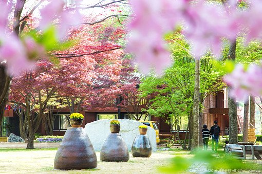 Nami Island & Petite France Shuttle Bus Package_2