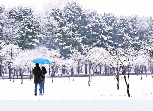 Nami Island Korea Winter