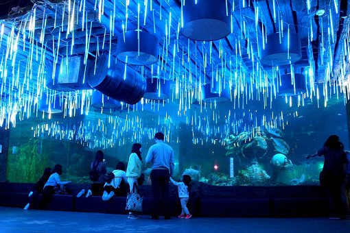 Busan Sea Life Aquarium Discount Ticket_23