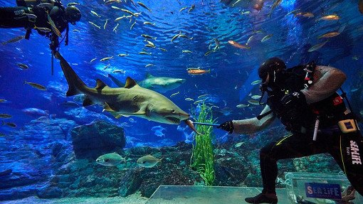 Busan Sea Life Aquarium Discount Ticket_20