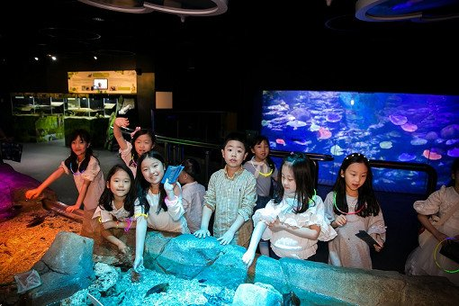 Busan Sea Life Aquarium Discount Ticket_26