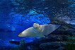 Busan Sea Life Aquarium Discount Ticket_thumb_21