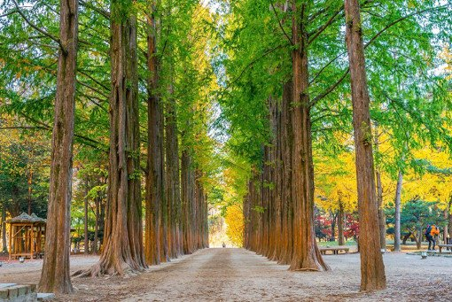 Nami Island & Petite France & Garden of Morning Calm Shuttle Package