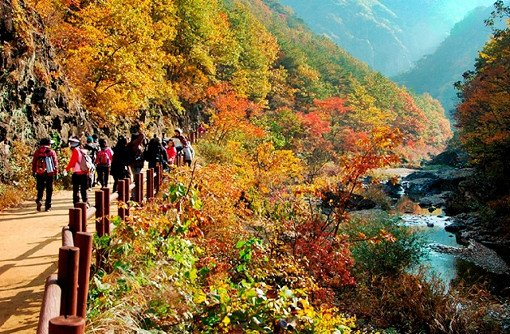 [Oct 16 - Oct 31] Seorak Mountain Autumn Foliage Shuttle Bus One Day Tour