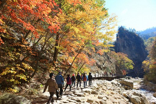[Oct 16 - Oct 30] Seorak Mountain Autumn Foliage Shuttle Bus One Day Tour_7