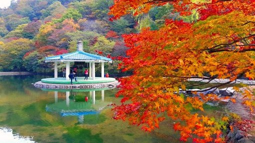[Oct 25 - Nov 20] Naejangsan Mountain Autumn Foliage Shuttle Bus One Day Tour