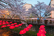 2018 Jinhae Cherry Blossom Festival One Day Shuttle Bus Tour_thumb_6