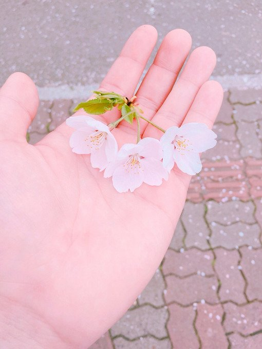 2018 Cherry Blossom Near Seoul One Day Tour_7