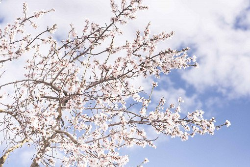 2018 Cherry Blossom Near Seoul One Day Tour_12