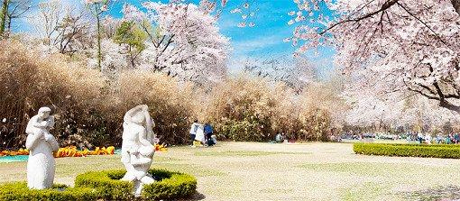 Cherry Blossom One Day Tour Seoul Grand Park View