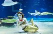 Hanwha Aqua Planet 63 & 63 Sky Art Observatory Discount Ticket_thumb_0