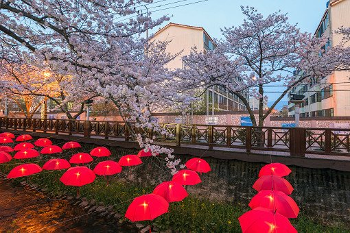 [From Busan] 2018 Jinhae Gunhangje Cherry Blossom Festival One Day Tour_11