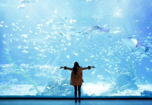 Jeju Aqua Planet Discount Ticket_1