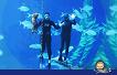 Jeju Aqua Planet Discount Ticket_thumb_3