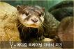 Jeju Aqua Planet Discount Ticket_thumb_11