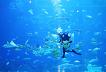 Jeju Aqua Planet Discount Ticket_thumb_6