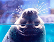 Lotte World and Lotte World Aquarium Discount Ticket_thumb_18