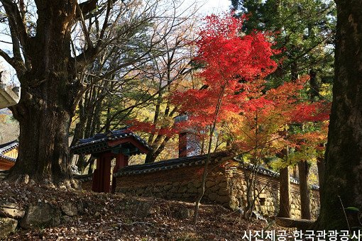[Oct 25 - Nov 8] [From Busan] Autumn Foliage Mountain One Day Tour_11