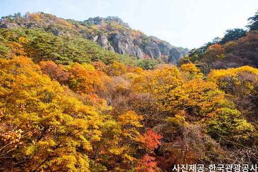 [Oct 25 - Nov 8] [From Busan] Autumn Foliage Mountain One Day Tour_12