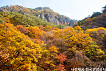 [Oct 25 - Nov 8] [From Busan] Autumn Foliage Mountain One Day Tour_thumb_12