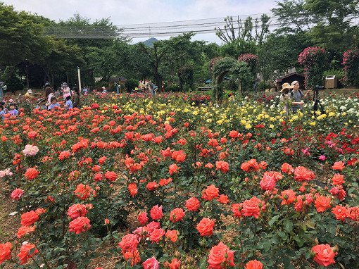 Seoul Land & Zoo Discount Ticket_26
