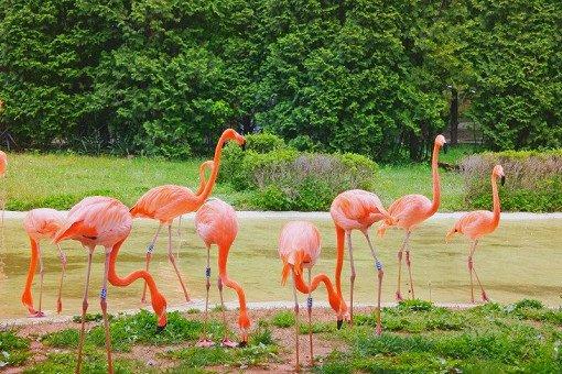 Seoul Land Theme Park & Seoul Land Zoo Discount Ticket