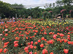 Seoul Land & Zoo Discount Ticket_thumb_26