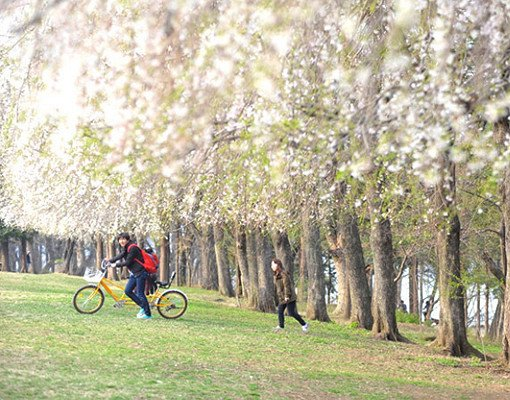 Nami Island All Inclusive Ticket (Zip Wire, Train, Bicycle)_2