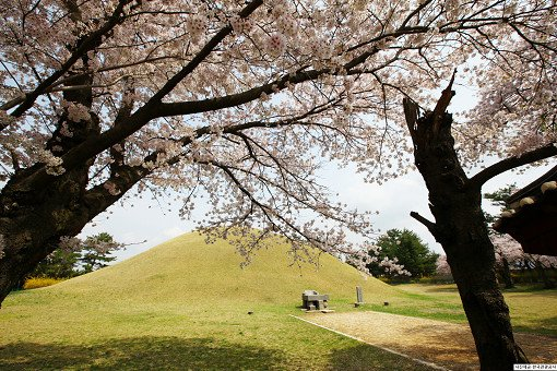 [From Busan] 2018 Gyeongju Cherry Blossom Festival One Day Tour_8