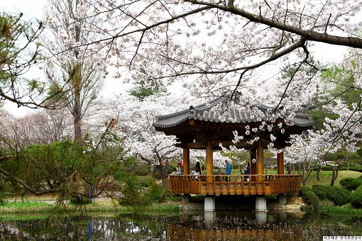 [From Busan] 2018 Gyeongju Cherry Blossom Festival One Day Tour_0