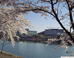 [From Busan] 2018 Gyeongju Cherry Blossom Festival One Day Tour_thumb_9