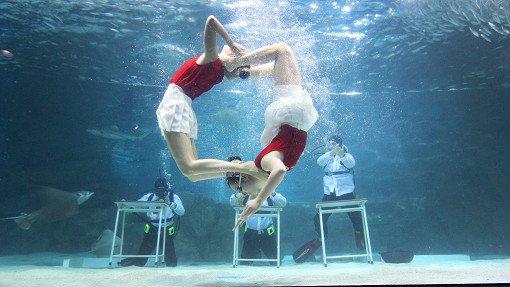 Coex Aquarium Discount Ticket_14