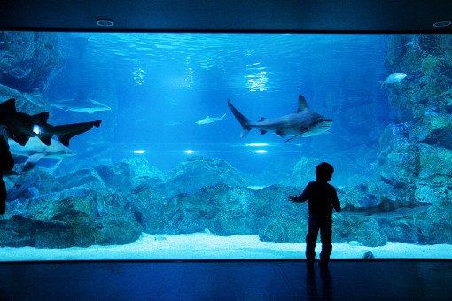 Coex Aquarium Discount Ticket_9