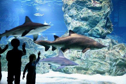 Coex Aquarium Discount Ticket_8