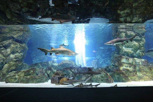 Coex Aquarium Discount Ticket_10