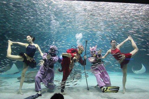 Coex Aquarium Discount Ticket_11