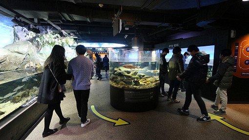 Coex Aquarium Discount Ticket_15