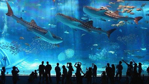 Аквариум Coex в Сеуле></p><p>Разработчики океанариума Coex приложили максимум усилий чтобы удивить посетителей. Вы словно оказываетесь на дне океана, а над вами проплывают огромные рыбы. Прогулка по Сеульскому аквариуму вызовет восторг не только у детей, но и у взрослых.&nbsp;<!--EndFragment--><!--StartFragment--></p><p>  </p><p><img src=