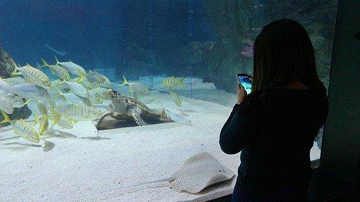 Coex Aquarium Discount Ticket_18