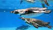 Coex Aquarium Discount Ticket_thumb_1