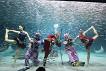 Coex Aquarium Discount Ticket_thumb_11