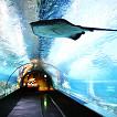 Coex Aquarium Discount Ticket_thumb_4