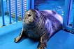 Coex Aquarium Discount Ticket_thumb_12