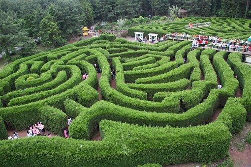Jeju Kimnyoung Maze Park Discount Ticket_0