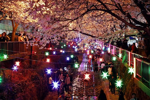 [From Busan] Jinhae Cherry Blossom Night Viewing Evening Tour