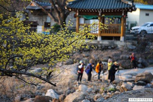[From Seoul/Busan] Gwangyang Maehwa Festival & Gurye Sansuyu Village One Day Tour_16