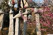 [From Seoul/Busan] Gwangyang Maehwa Festival & Gurye Sansuyu Village One Day Tour_thumb_10