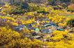 [From Seoul/Busan] Gwangyang Maehwa Festival & Gurye Sansuyu Village One Day Tour_thumb_0