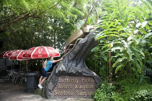 Singapore Butterfly Park and Insect Kingdom Ticket_2